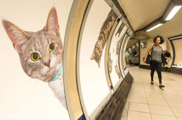 All adverts in London's underground station have been replaced with cat pictures