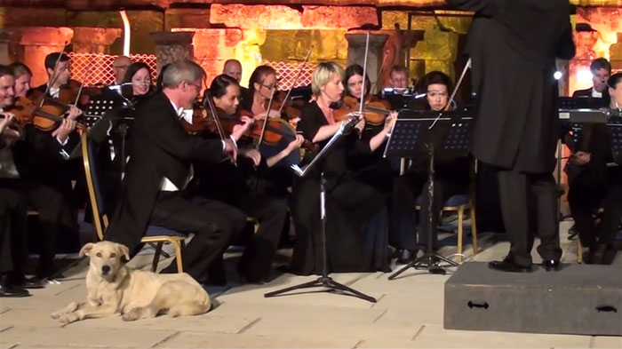 A Very Cultured Dog Walks Into An Orchestra Performance, Wins Everyone's Hearts
