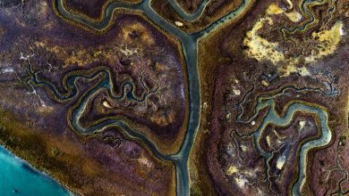 Abstract aerial photographs reveal the beauty of meandering waterways