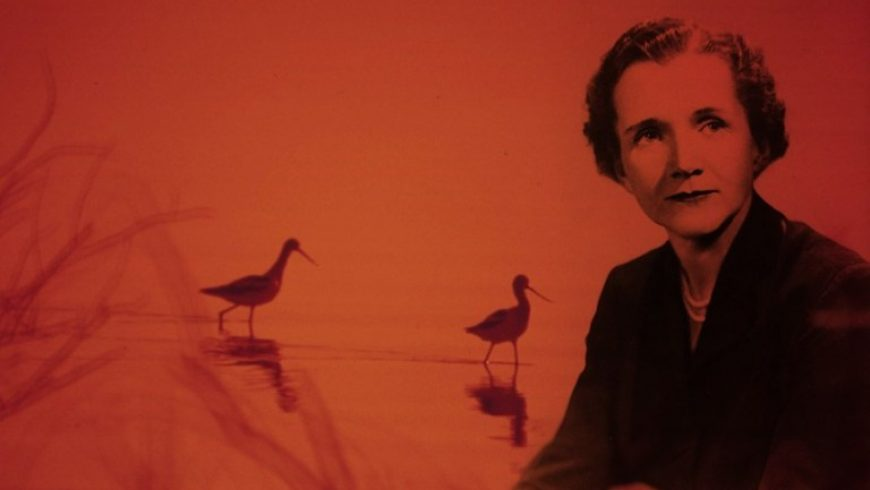 Rachel Carson's Bittersweet Farewell to the World: Timeless Advice to the Next Generations from the Woman Who Catalyzed the Environmental Movement