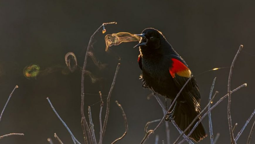 Birds hunt, hide, and blow impressive smoke rings in a selection of images from the 2019 Audubon Photography Awards