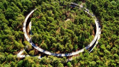 Breeze through the forest canopy on a spiraled bike path in Belgium