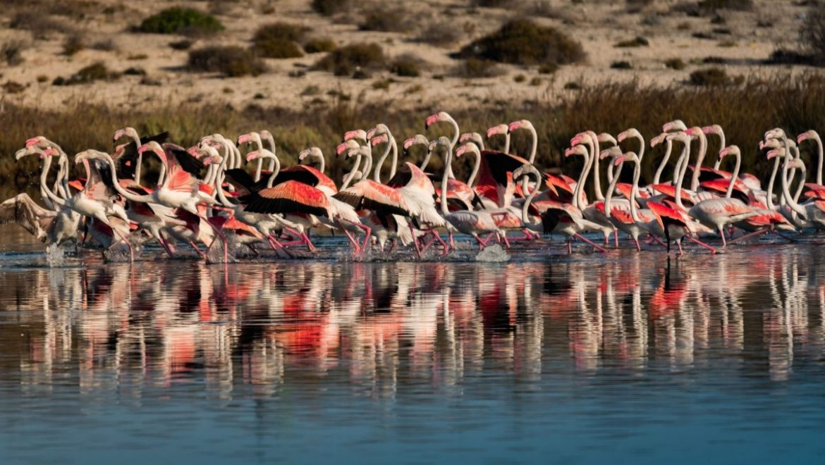 The season of flamingos