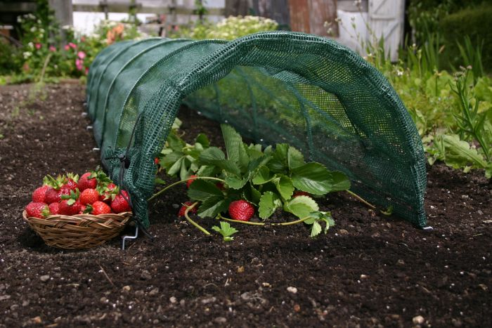 Ο δεκάλογος του ερασιτέχνη καλλιεργητή λαχανικών