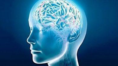 Ο ανθρώπινος εγκέφαλος