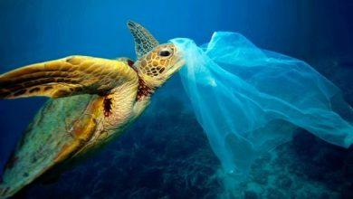 Οι ακτές καθάρισαν μετά τη χρέωση στην πλαστική σακούλα