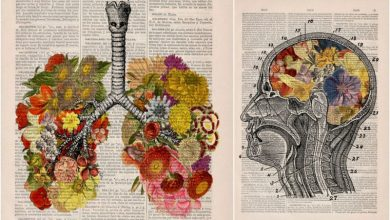 Floral απεικονίσεις ανατομίας σε σελίδες παλιών λεξικών