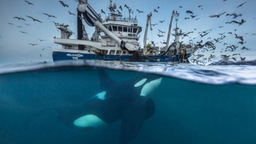 Οι 10 καλύτερες φωτογραφίες άγριας φύσης 2016