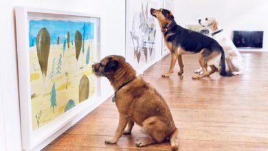 Η πρώτη έκθεση τέχνης μόνο για σκύλους