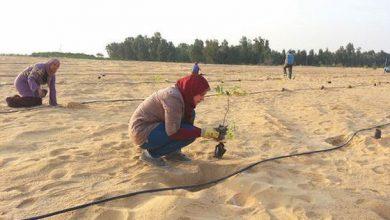 Δημιουργία δάσους στην έρημο με χρήση λυμάτων