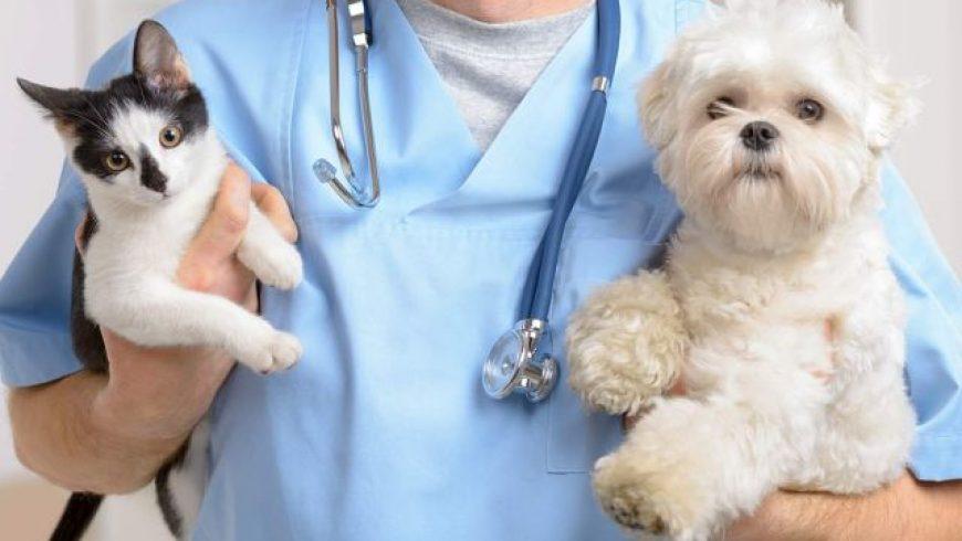Δωρεάν εμβολιασμοί και στειρώσεις από το Δημοτικό Κτηνιατρείο Λευκάδας