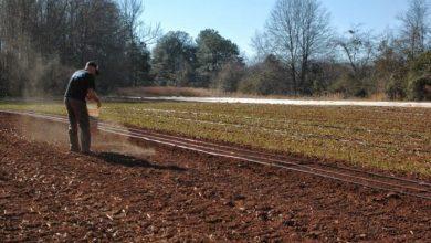 Κατάθεση αιτήσεων για βιολογική γεωργία