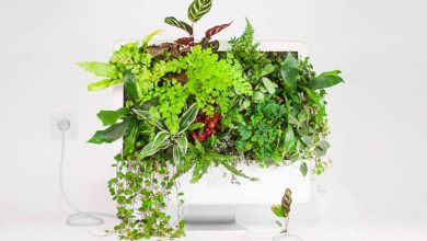 Old Apple Products Turned into Plants
