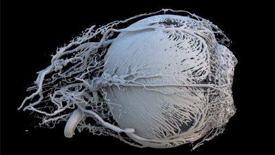 Αυτές είναι οι 22 πιο εντυπωσιακές επιστημονικές φωτογραφίες της χρονιάς