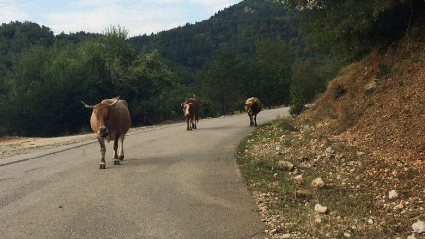 Ανακοίνωση του Δήμου Λευκάδας για τα ανεπιτήρητα ζώα