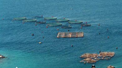 Η μεσογειακή υδατοκαλλιέργεια χαράζει πορεία προς τις υπεύθυνες πρακτικές