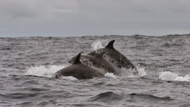 Ο θάνατος της Μεσογείου: Tο 41% των θαλάσσιων θηλαστικών και το 34% των ψαριών της χάθηκαν τα τελευταία 50 χρόνια