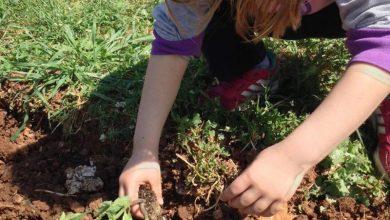 Καλλιεργώντας ένα περιβόλι για καλό σκοπό