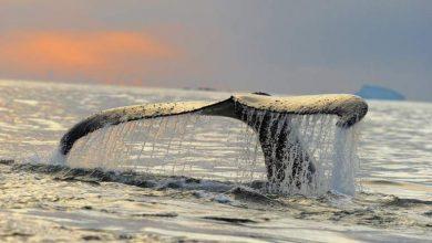 Μια ημέρα με τις φάλαινες στον Ανταρκτικό Ωκεανό