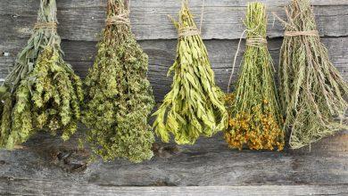 Θερινό Σχολείο: «Αρωματικά φυτά και βότανα στον παραδοσιακό και σύγχρονο ελληνικό πολιτισμό»