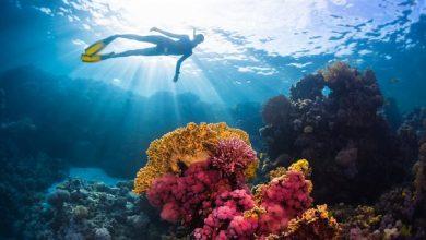 Πάνω από το 13% των κοραλλιών της Μεσογείου απειλούνται με εξαφάνιση