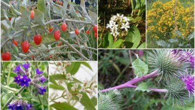 Γνωρίστε όλα τα αρωματικά και φαρμακευτικά φυτά της Ηπείρου