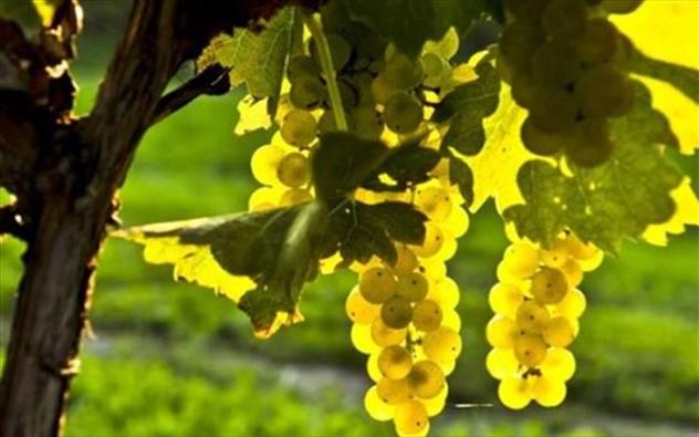Έντεκα νέα έργα έρευνας για την στήριξη & ανάδειξη των προϊόντων της Ιόνιας γης ενέταξε στο ΕΣΠΑ ο Περιφερειάρχης