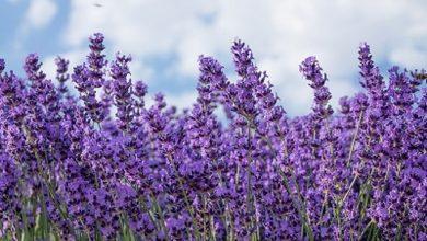 Ημερίδα στην Πρέβεζα: «Καλλιέργεια και μεταποίηση αρωματικών & φαρμακευτικών φυτών»