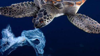 Καμπάνια κατά του πλαστικού στις θάλασσες