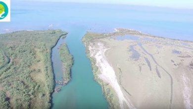 Εντυπωσιακά πλάνα από τις προστατευόμενες περιοχές στο Δέλτα Καλαμά