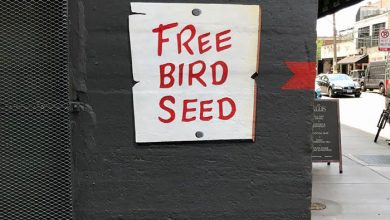 This 'Free Bird Seed' Graffiti Leads To Unexpected Surprise In Chicago