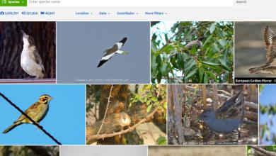 Αρχείο με 150.000 ήχους και κελαϊδίσματα πουλιών από το Cornell Lab of Ornithology