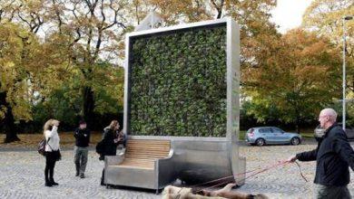 Εφεύρεση: Τείχος από πράσινο καθαρίζει τον αέρα όσο κι ένα δάσος