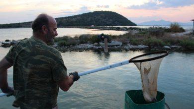 Οι ιβαράδες του Αμβρακικού- αλιευτές και φύλακες του φυσικού μας πλούτου