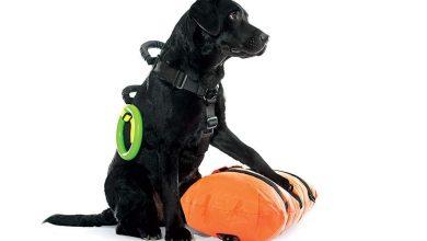 Και τώρα σκυλιά-ναυαγοσώστες