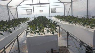Στο ΤΕΙ Θεσσαλίας καλλιεργούν λαχανικά με μέθοδο της ΝASA