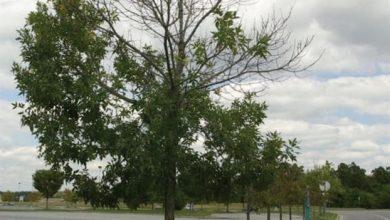 Δέντρα «μιλούν» για την κλιματική αλλαγή μέσω Twitter