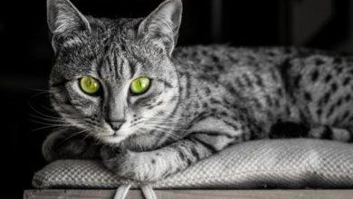 Oι γάτες και η εύθραυστη συμβίωση μαζί τους