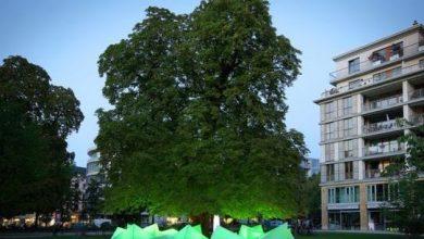 Το μουσικό δέντρο