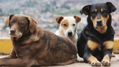 Στείλτε τις προτάσεις σας για την αναμόρφωση του νόμου για τα δεσποζόμενα και τα αδέσποτα ζώα