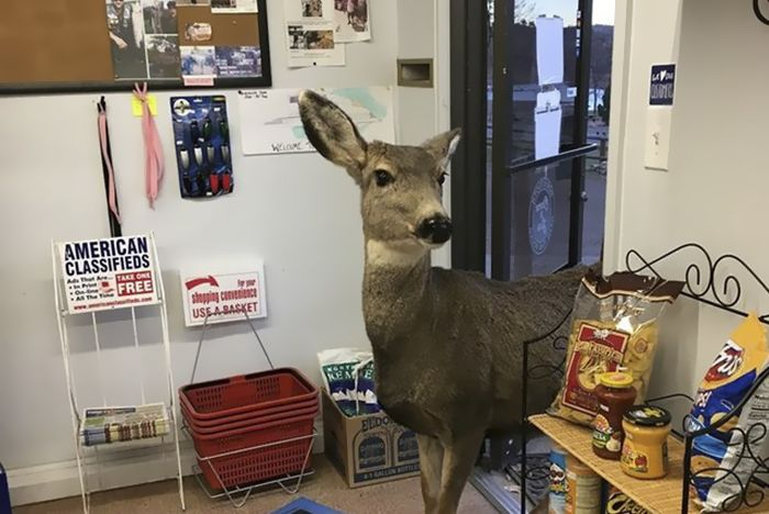 Deer walks into store to check their goods