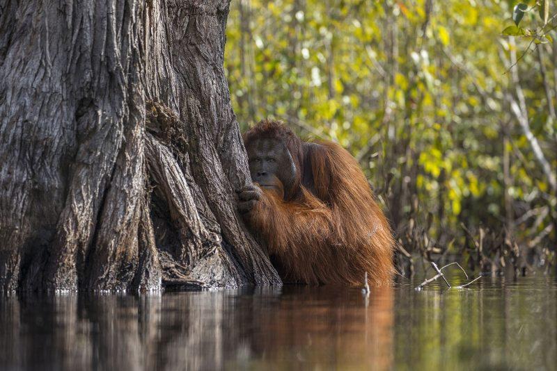 Οι 20 θεαματικές φωτογραφίες που κέρδισαν το φετινό διαγωνισμό του National Geographic Nature
