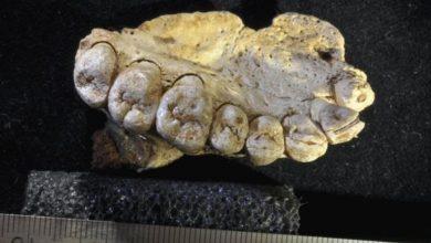 Μετανάστευση πριν από 177.000 χρόνια μαρτυρούν ευρήματα
