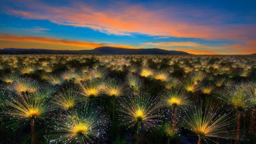 Οι πιο όμορφοι κήποι του κόσμου για το 2018