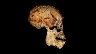 Homo erectus: Ο πρώτος άνθρωπος που μίλησε ήταν ναυτικός και έφθασε ως την Κρήτη, σύμφωνα με επίμαχη θεωρία
