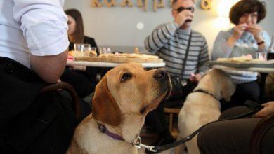 Οι σκύλοι-οδηγοί μπορούν ν' αλλάξουν τη ζωή των ανθρώπων με προβλήματα στην όραση