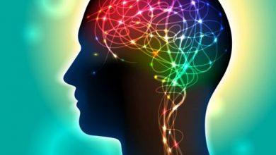 Φως στα μυστικά του εγκεφάλου