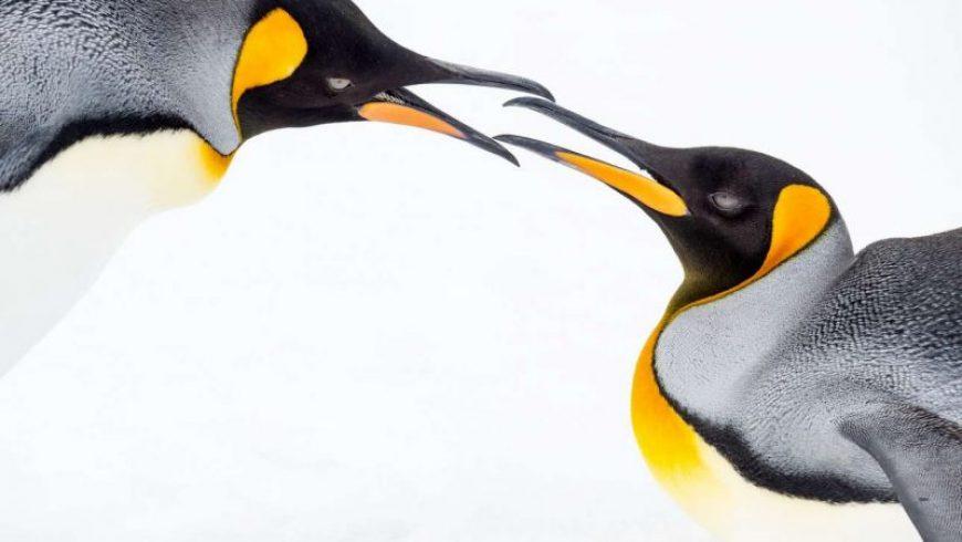 National Geographic: Ταξίδι, φωτογραφία & βραβεία