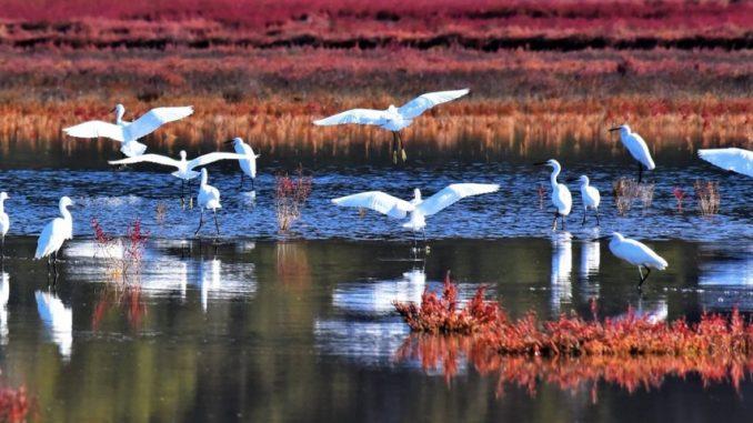 Τριήμερο αφιέρωμα για τη λιμνοθάλασσα της Λευκάδας