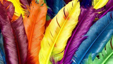 10ος Μαθητικός Διαγωνισμός Φωτογραφίας με θέμα : «Η μαγεία των χρωμάτων»